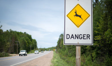 How to Safely Share the Road with Wildlife